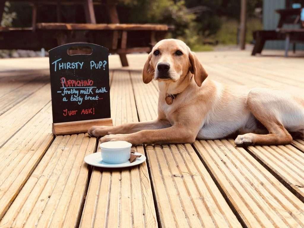 Dog enjoying dog-friendly café in Glencoe